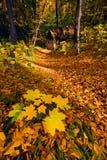 Verlorenes Haus im Herbstwald Stockbilder