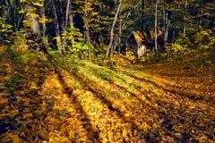 Verlorenes Haus im Herbstwald Stockfotografie