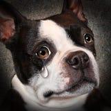 Verlorenes Haustier Stockfotografie