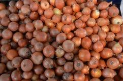 Verlosen Sie ` s von Zwiebeln auf Stall im Basartruthahn Antalya Lizenzfreie Stockbilder