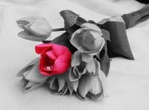 Verlovingsring binnen tulpenbloem Stock Afbeelding
