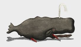 Vermaak van Biologie - Vissen 1798 die, een opgerichte potvis op water door een gietgal schieten stock illustratie