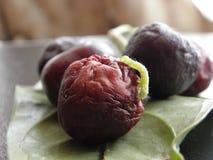 Verme verde che mangia un'ultima ciliegia Fotografie Stock
