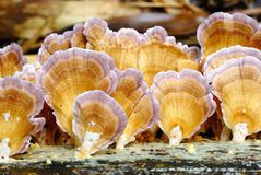 Vermehren Sie sich auf totes Bauholz im tropischen Regenwald explosionsartig Lizenzfreies Stockbild