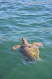 vermelha χελωνών θάλασσας νησιών coroa Bahia Βραζιλία Στοκ φωτογραφίες με δικαίωμα ελεύθερης χρήσης