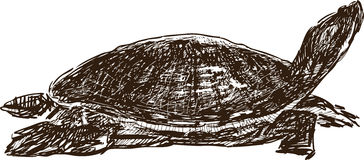 vermelha черепахи моря острова coroa Бахи Бразилии Стоковое Изображение