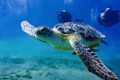 vermelha för sköldpadda för hav för bahia brazil coroaö Fotografering för Bildbyråer