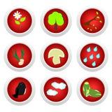 Vermelho ajustado da tecla da ecologia Fotografia de Stock Royalty Free
