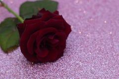 Vermelho aumentou o fundo borrado do bokeh Fundo do Valentim ou do casamento, cartão do dia de Valentim Rosa em um fundo brilhant fotografia de stock