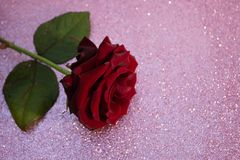 Vermelho aumentou o fundo borrado do bokeh Fundo do Valentim ou do casamento, cartão do dia de Valentim Rosa em um fundo brilhant foto de stock