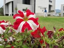 Vermelho & branco Foto de Stock