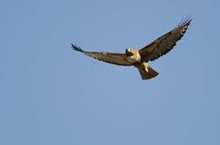 Vermelho-cauda Hawk Flying em um céu azul imagens de stock royalty free