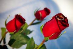 Vermelho cor-de-rosa e anel Fotos de Stock