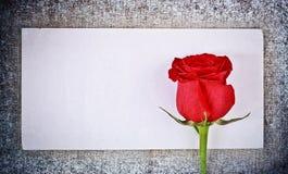 Vermelho cor-de-rosa e letra fotografia de stock royalty free