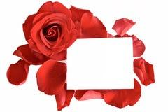 Vermelho cor-de-rosa e pétalas com cartão Imagens de Stock