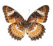 Vermelho da borboleta que lacewing foto de stock royalty free