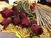 Vermelho da flor Imagens de Stock