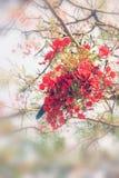 Vermelho da flor imagens de stock royalty free