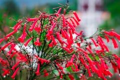 Vermelho da flor no fundo verde Fotos de Stock