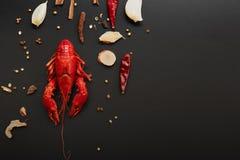 Vermelho das lagostas, lagosta do bebê com a erva para a fritada da agitação no fundo preto imagens de stock