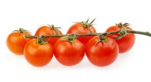 Vermelho de cereja dos tomates Fotografia de Stock