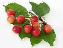 Vermelho de cerejas Fotografia de Stock Royalty Free