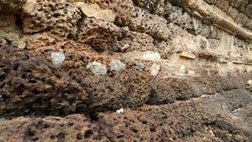 Vermelho de tijolo Imagens de Stock