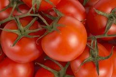 Vermelho do tomate fotografia de stock royalty free