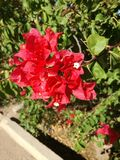 Vermelho e brilhante fotografia de stock royalty free