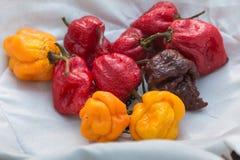 Vermelho e Chili Peppers secado laranja dentro da bacia branca Imagem de Stock Royalty Free
