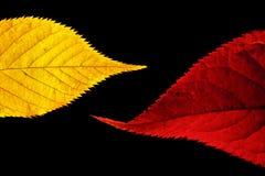 Vermelho e folhas do ouro Fotografia de Stock