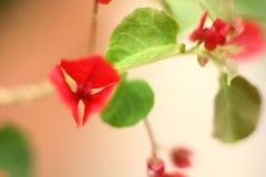 Vermelho e verde Fotografia de Stock