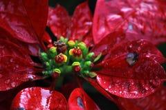 Vermelho e verde Imagem de Stock