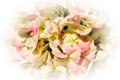 Vermelho e vinheta das flores do pêssego Fotografia de Stock Royalty Free