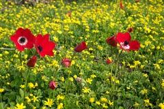 Vermelho em um campo amarelo Fotografia de Stock Royalty Free