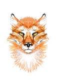 Vermelho, Fox, cabeça, imagem Imagens de Stock