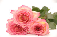 Vermelho-heltye as rosas Fotos de Stock Royalty Free