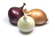 Vermelho, marrom e branco do â das cebolas Foto de Stock Royalty Free