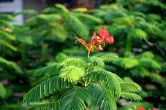 Vermelho no verde Foto de Stock