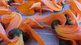 Vermelho seco da flor rápida da flor foto de stock