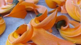 Vermelho seco da flor rápida da flor imagem de stock royalty free
