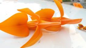 Vermelho seco da flor rápida da flor fotografia de stock royalty free