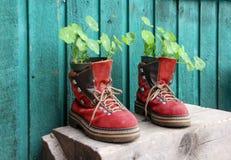 Vermelho velho que caminha sapatas com plantas imagens de stock royalty free