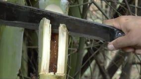 Vermi di bambù del ritrovamento della gente da mangiare archivi video