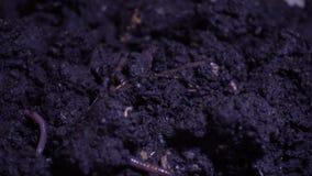 Vermi in suolo bagnato stock footage