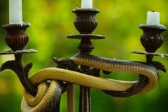 Vermijd Risico Slang rond kandelaar op aard wordt verpakt die Stilleven met kandelabers en slang openlucht Goddelijkheid en duive royalty-vrije stock afbeeldingen