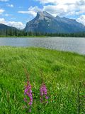 Vermilion Lakes with fireweed. Vista with peaks and fireweed, Vermilion Lakes near Banff, Alberta, Canada Royalty Free Stock Image