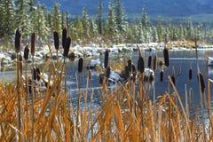 Vermilion Lakes Marsh Wetland Banff National Park Canadian Rockies. Tall Marsh Grass Wetland Landscape at Vermilion Lakes in Banff National Park Alberta Canada Stock Photos