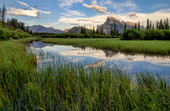 Vermilion Lakes Marshland With Mountain Reflection. Marsh grass surrounding a perfect reflection of the rocky mountains in Vermilion lakes Royalty Free Stock Photos