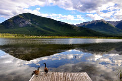 Vermillion Lake Canada with ducks reflections. Canadian outdoor lake scenery, with ducks on quay Royalty Free Stock Images